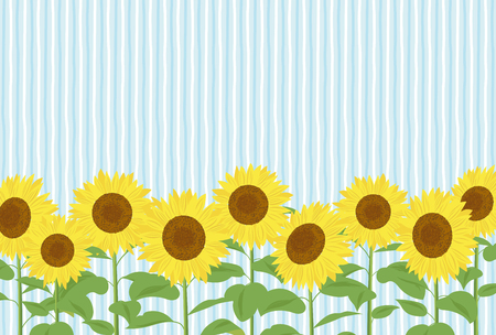 Summer greeting card of sunflower