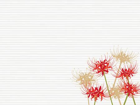 equinox: A cluster amaryllis flower vector frame.