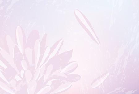Priorità bassa giapponese del fiore del crisantemo