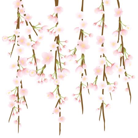 Weeping cherry blossom vector illustration.