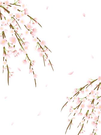 Chorando fundo de vector de flor de cerejeira. Foto de archivo - 94843999