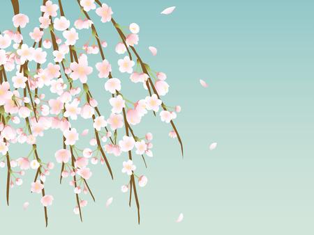 Weinende Kirsche Blüte Vektor Hintergrund