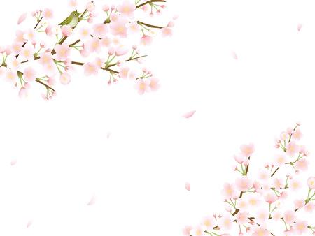 Cherry blossom vector frame.
