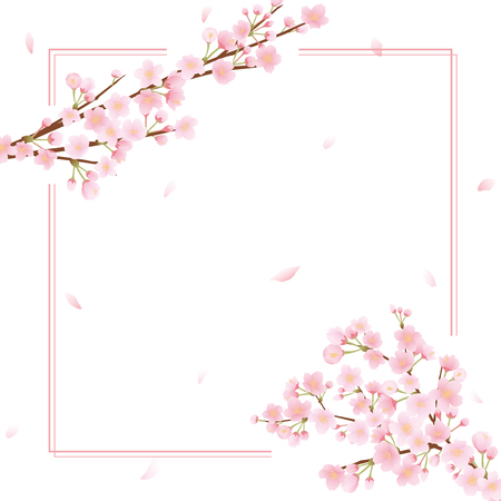 Cherry blossom vector frame on plain presentation.