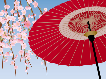 Japanese umbrella and cherry blossoms scenery.