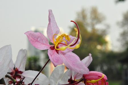 leguminosae: Wishing Tree Stock Photo