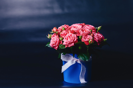 Rose bush in basket of Barbados variety on dark simple background