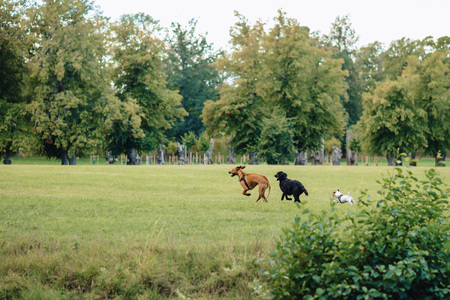 dogs are wild playing and running in the nature Stock Photo