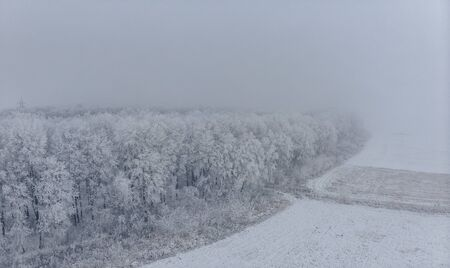 Field and white frozen trees in fog in winter, aerial view from the high altitude