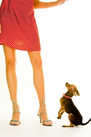 Closeup of a girl�s legs standing with a small dog near by photo