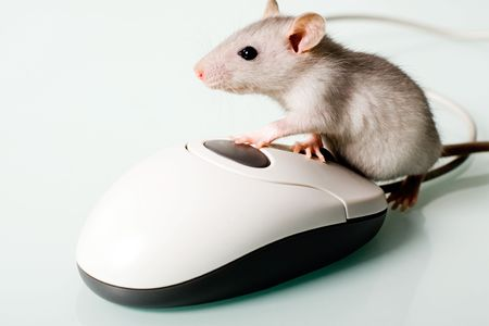 technology metaphor: Image of small pet touching to the computer mouse Stock Photo