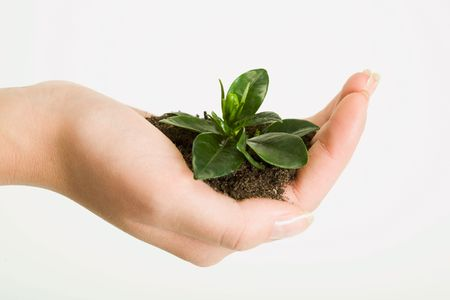 abound: Photo of green plant in the female hand over white background
