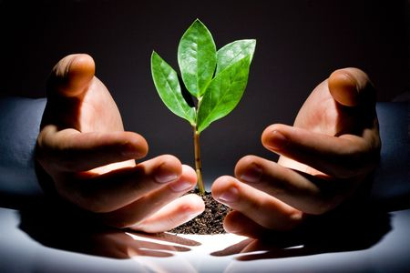 Photo of green plant between male hands on a black background  photo