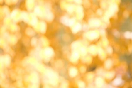 Blurred background of yellow or golden symbolizing either autumn leaves or Christmas decoration Stock Photo - 3931483