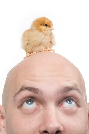 amazement: Image of amazed man looking upwards at his bald head with cute chick on it Stock Photo