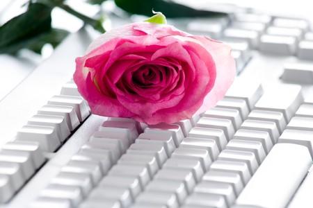 keyboard key: Photo of pink rose bud lying on white computer board