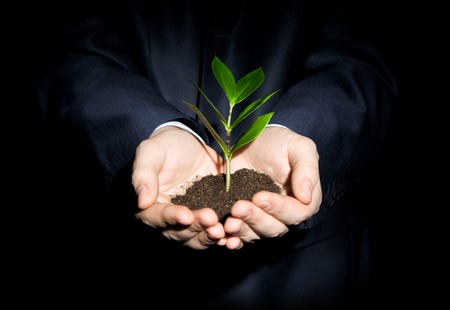 nurturing: Close-up of fresh branch with leaves in soil held by a human