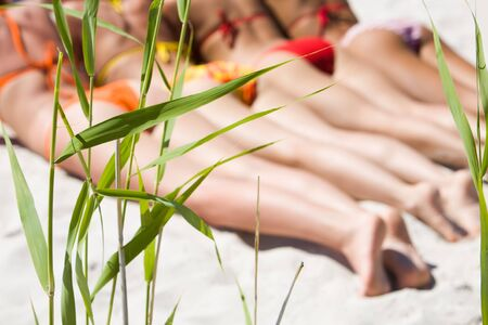 Image of green grass on the beach with sunbathing girls at background photo