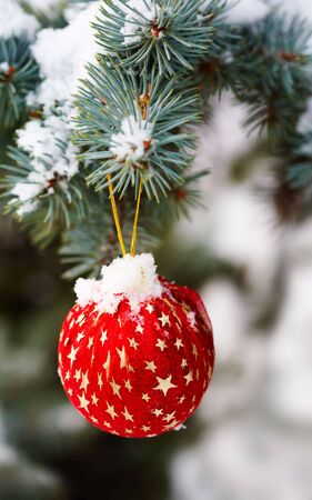 Image of red decorative toy ball hanging on spruce branch with snow on it Stock Photo - 6109264