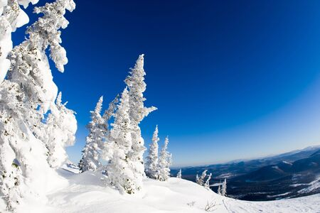 View of snow-covered trees with blue hills at background photo