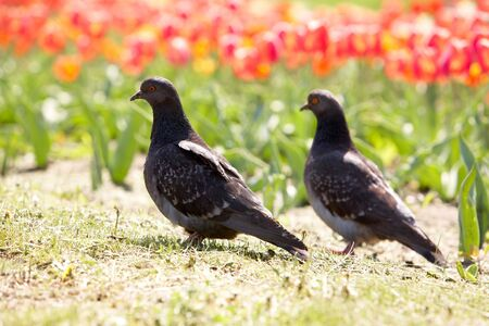 Image of two pigeons on background of flowers outdoors Stock Photo - 6669713