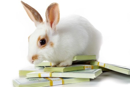 Image of cautious rabbit with dollar bills in isolation photo