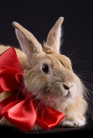 Image of cute rabbit with red bow on black background Stock Photo
