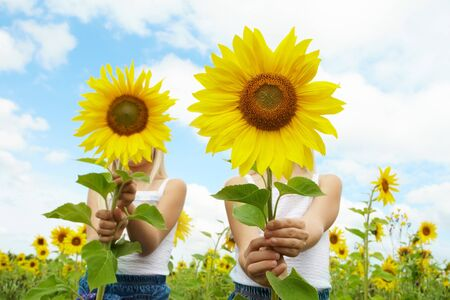 Portrait of cute girls hiding behind sunflowers on sunny day Stock Photo - 7518037