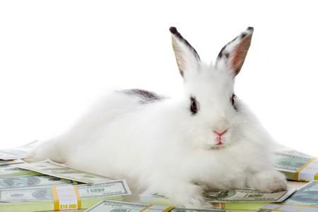cautious: Image of cautious rabbit on heap of dollar bills in isolation