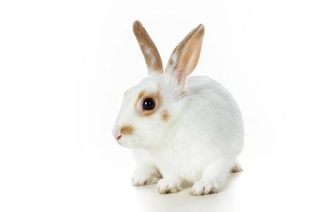cautious: Image of cautious rabbit on white background in isolation