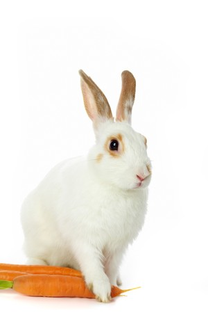 cautious: Image of cautious rabbit with carrots sitting in isolation Stock Photo