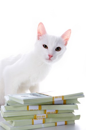 Image of cute white cat sitting by heap of dollar bills over white background photo