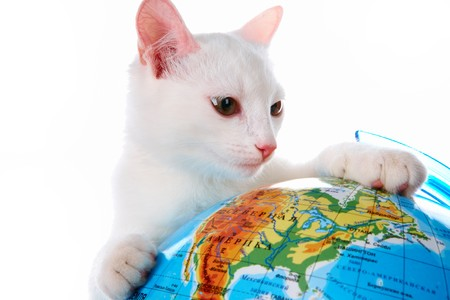 Image of playful white cat looking at globe in studio photo