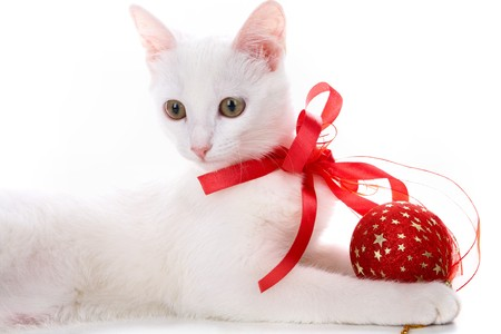 new year cat: Image of white cat with red ribbon and ball in studio over white background