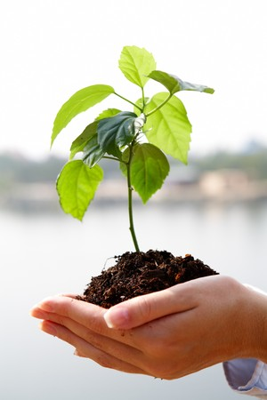 Close-up of fresh branch with leaves in soil held by a human Stock Photo - 7843939