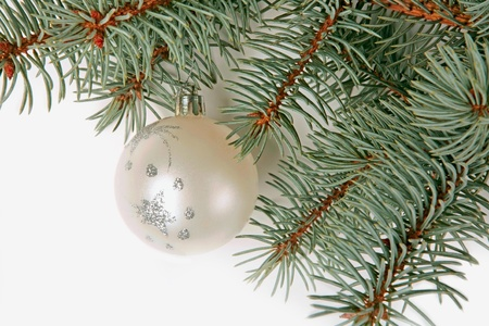 bedeck: Green twig of fir-tree with christmas ball Stock Photo