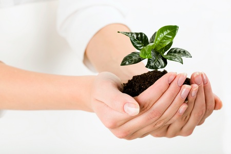 Growing green plant in the female hand photo