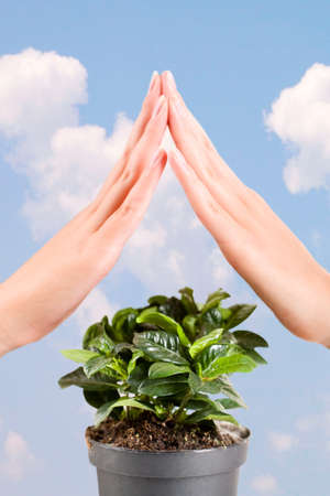 Green plant under the protection of female hands on a background of sky photo