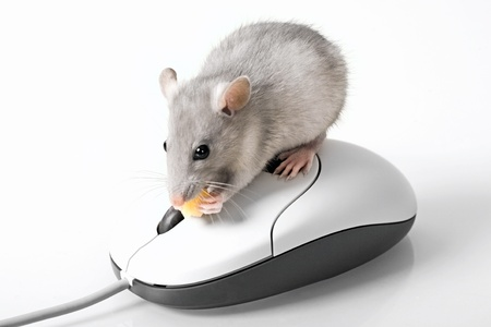 Creative image of grey mouse above intellimouse Stock Photo - 8394293