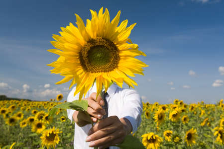 Image of female hiding face behind sunflower outdoors Stock Photo - 8494281