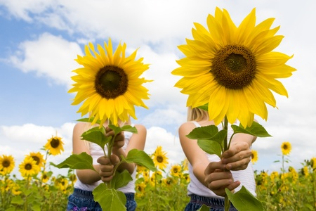 Portrait of cute girls hiding behind sunflowers on sunny day Reklamní fotografie