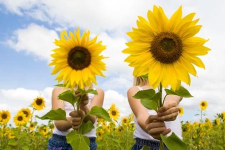 girasol: Retrato de las ni�as lindos escondido detr�s de girasoles en d�a soleado