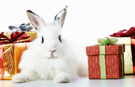 cautious: Image of cautious rabbit surrounded by giftboxes Stock Photo