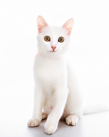 Image of white cat decorated with red ribbon over white background photo