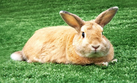 cautious: Image of cautious rabbit in green grass outdoor Stock Photo