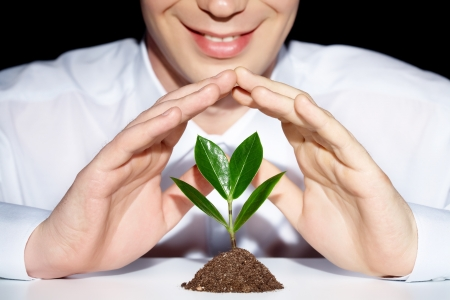metaphor: Photo of businessman�s hands preserve a young plant