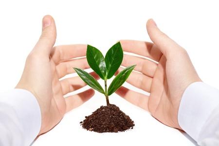 nurturing: Image of green little plant between male hands