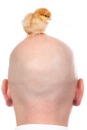 Image of back of the head with chick over Stock Photo - 9380424