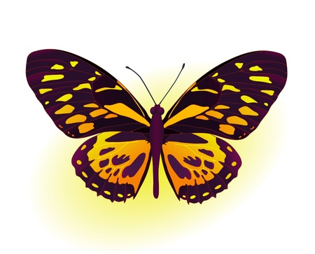 Painting card of beautiful black and yellow butterfly Stock Vector - 9414788