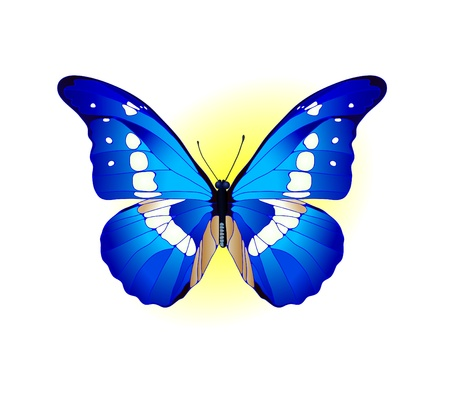 yellow butterfly: Vector illustration of beautiful blue butterfly  Illustration